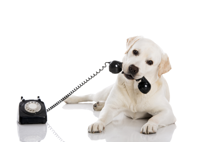 dog_and_handset.png